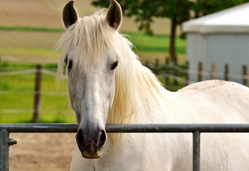 Paardengedragstherapie Groningen