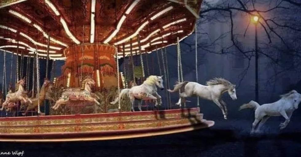 learned helplessness bij paarden