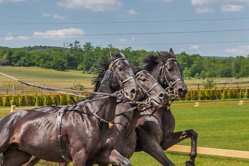wat kun je doen wanneer je paard bang of angstig is