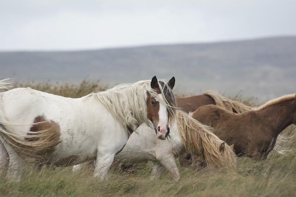 De mens als alfa-leider over paarden
