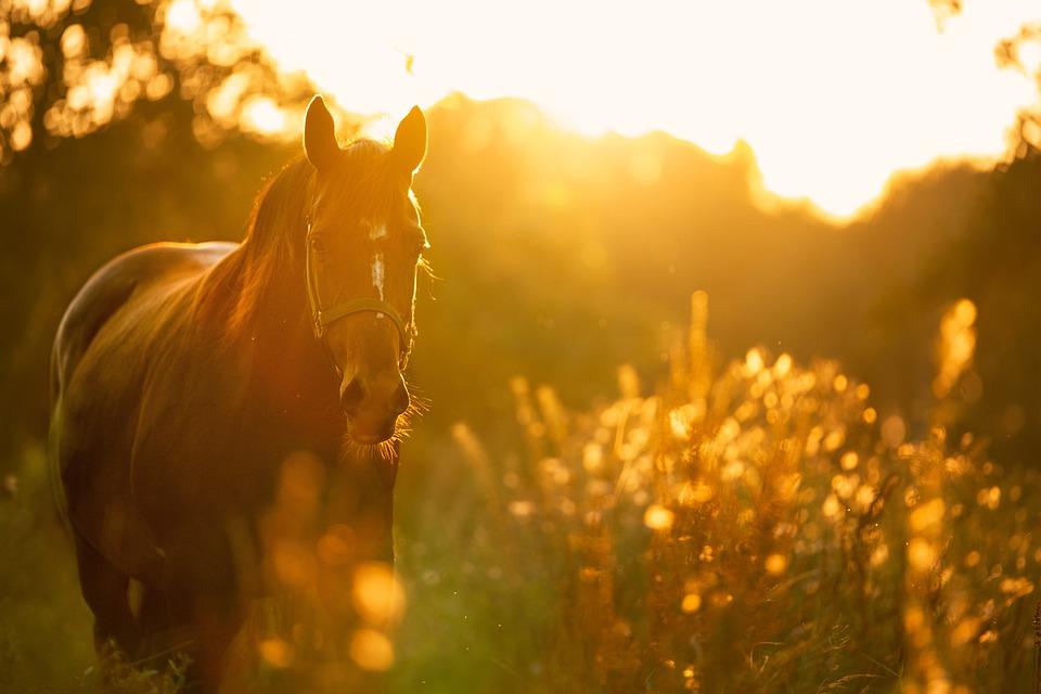 Hulp bij paardengedragsproblemen